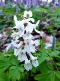 Flor en el bosque fotografía de archivo libre de regalías
