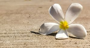 Flor en el camino Imagen de archivo