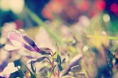 Flor en el campo Imágenes de archivo libres de regalías
