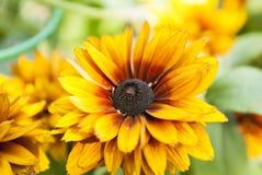Flor en el campo en Rusia fotos de archivo