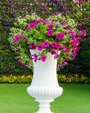 Flor en el florero blanco Foto de archivo libre de regalías