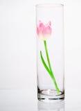 Flor en el florero de cristal imagen de archivo libre de regalías