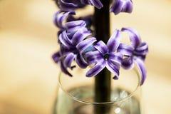 Flor en el florero de cristal Fotos de archivo libres de regalías