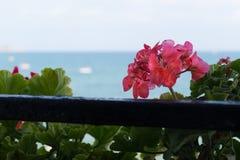 Flor en el fondo del mar Fotografía de archivo libre de regalías