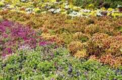 Flor en el jardín Imagen de archivo libre de regalías