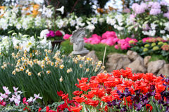 Flor en el jardín Fotos de archivo