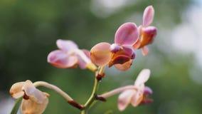 Flor en el jardín Fotografía de archivo libre de regalías