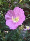 Flor en el jard?n imagenes de archivo