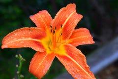 Flor en el manojo foto de archivo