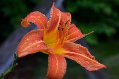 Flor en el manojo fotos de archivo