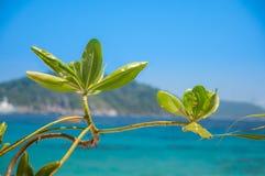 Flor en el mar imagen de archivo