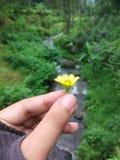 Flor en el medio de la selva Imagen de archivo libre de regalías