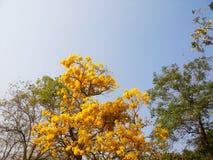 Flor en el otoño debajo del cielo azul Fotos de archivo libres de regalías