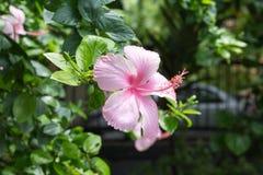 Flor en el parque después de la primera lluvia Imagen de archivo libre de regalías