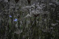 Flor en el parque natural de Vacaresti, Bucarest, Rumania Foto de archivo