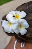 Flor en el pelo fotografía de archivo libre de regalías