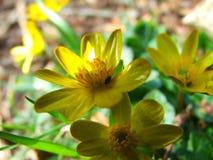 Flor en el sol Fotografía de archivo