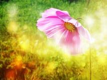 Flor en el sol Imagen de archivo libre de regalías