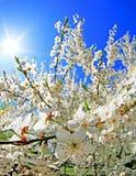 Flor en el spirng Imagen de archivo