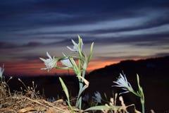 Flor en el sund en la puesta del sol fotografía de archivo