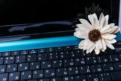 Flor en el teclado de ordenador Imagenes de archivo