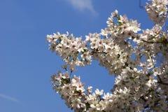 Flor en estación de primavera Fotos de archivo