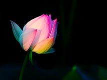 Flor en fairyland Imágenes de archivo libres de regalías