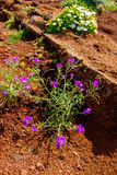 Flor en flor Fotos de archivo