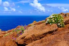 Flor en flor Imagen de archivo