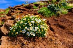 Flor en flor Foto de archivo libre de regalías
