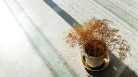 Flor en florero Fotografía de archivo