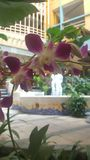 Flor en foco imagenes de archivo