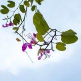 Flor en fondo del cielo Imágenes de archivo libres de regalías