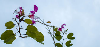 Flor en fondo del cielo Imagen de archivo