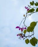 Flor en fondo del cielo Imagenes de archivo