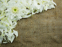 Flor en fondo del marco del saco Imagen de archivo