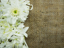 Flor en fondo del marco del saco Imagenes de archivo