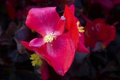 Flor en fondo oscuro Foto de archivo libre de regalías