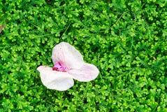 Flor en fondo verde del musgo Fotografía de archivo libre de regalías
