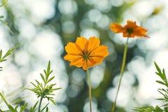 Flor en fotografía del bokeh imágenes de archivo libres de regalías