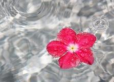 Flor en fuente de agua Imagenes de archivo