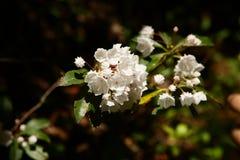 Flor en gran montaña ahumada Imágenes de archivo libres de regalías