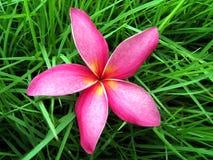 Flor en hierba Fotos de archivo