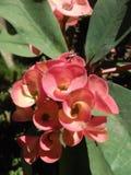 Flor en Indonesia imagenes de archivo