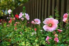 Flor en jardín ilustración del vector