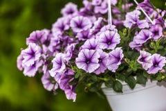Flor en jardín Imagen de archivo