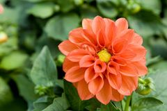 Flor en jardín Fotografía de archivo libre de regalías