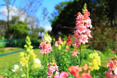 Flor en jardín Imagenes de archivo
