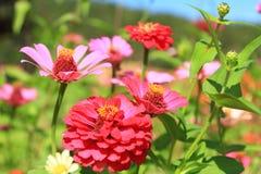 Flor en jardín Foto de archivo