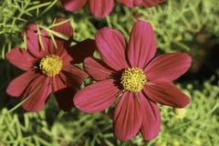 Flor en jardín Fotografía de archivo